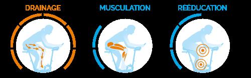 Muscles utilisés